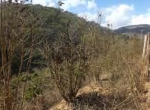 Posicionamento pastoral a respeito da crise hídrica, estiagem e endividamento da agricultura familiar nas regiões norte e noroeste do Espírito Santo