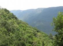 Biodiversidade ameaçada: a agonia da Mata Atlântica no Rio Grande do Sul