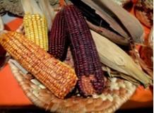 Seminário de Agricultura Familiar