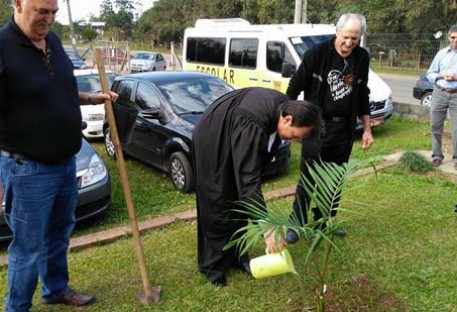 Muda de Palmeira Real plantada em Campo Grande