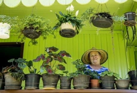 Apreciadora de ervas medicinais
