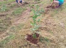 Comunidade Cosmópolis planta árvores pelos 500 anos