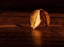 Ponderações sobre o morrer - e o estar morto