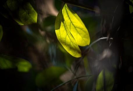Declaração sobre a Crise Global da Biodiversidade e a Necessidade Urgente de mudança Estrutural