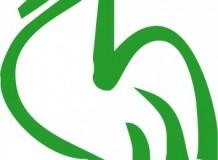 O Galo Verde, responsabilidade das Igrejas