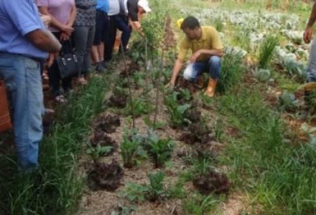 Agroflorestas, caminhos para a agricultura do futuro