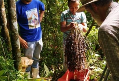 Polpas e picolés de frutas nativas com sabor da natureza e alto valor nutritivo