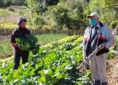 Campanha Cesta Consciente doa produtos da agricultura familiar e agroecológica e da economia solidária a famílias afetadas pela pandemia