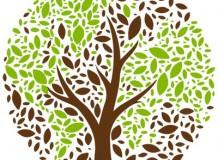 22 - Sustentabilidade e Jubileu - João 15.1ss