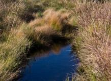 Galo Verde promove diálogo no Dia Mundial da Água